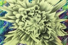 Petals_for_Novae沖縄